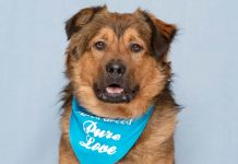 Humane Society for Southwest Washington pet of the week Care Bear