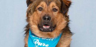 Humane Society for Southwest Washington pet of the week Care Bear