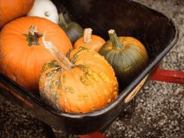 Pomeroy farm pumpkin lane