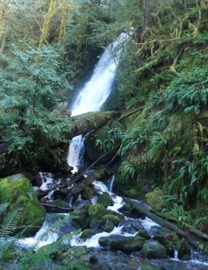 Day trip Waterfalls Olympic Peninsula Merriman-Falls