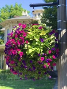 Vancouver Downtown Association annual Flower Basket Program