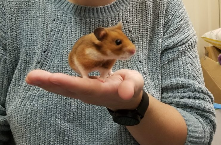 Zitch Hamster Rescue 3