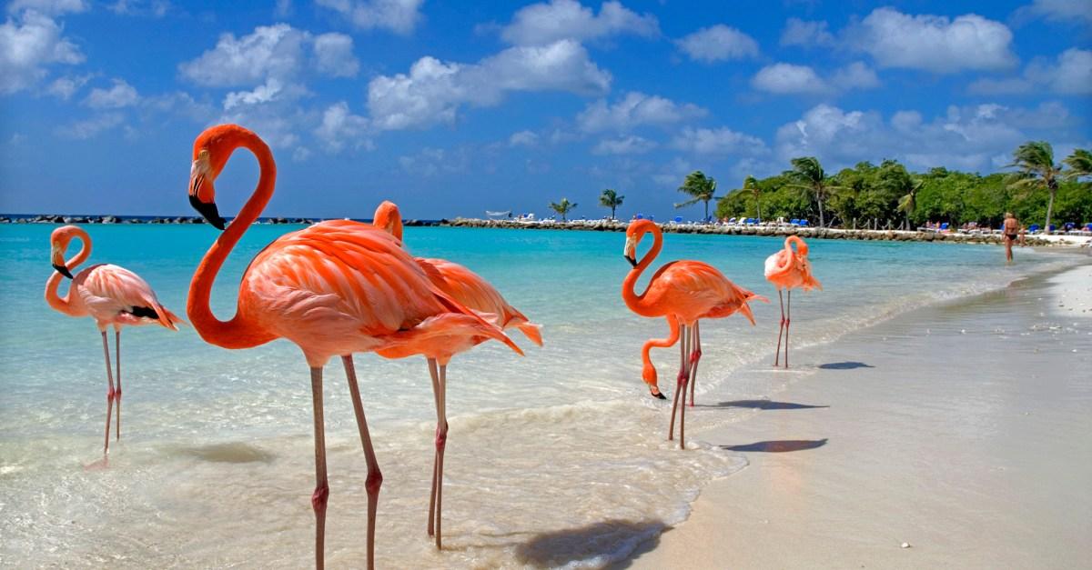 Flights to Aruba in the $300s round-trip!