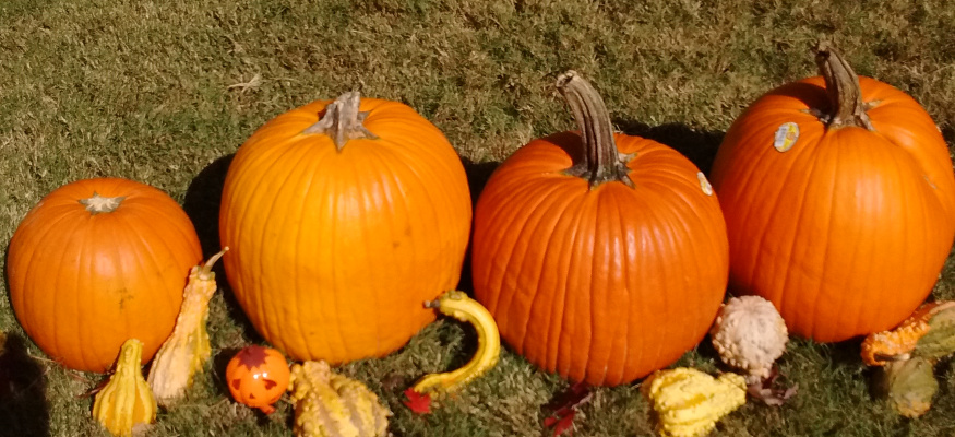 Here's where to find the cheapest Halloween pumpkins this year