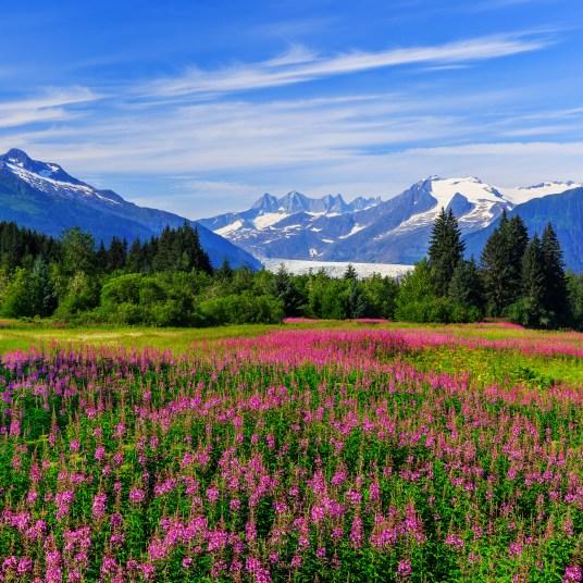 Alaska Toursaver: Save thousands on sightseeing in Alaska