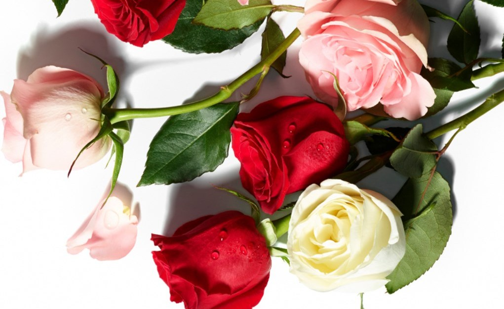 Prime members: Two dozen whole trade roses for $20 at Whole Foods