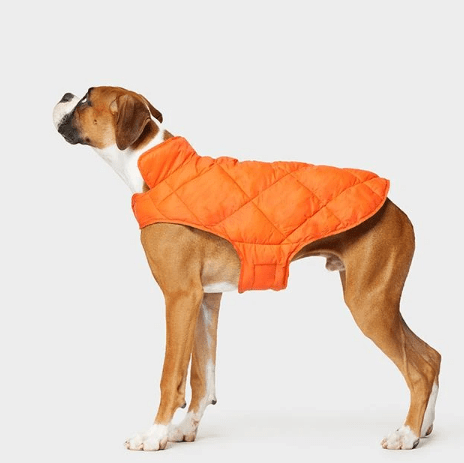 Get a FREE dog vest with jacket purchase from 32 Degrees