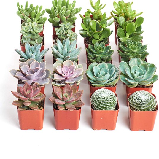 Today only: Shop Succulents live plants from $13