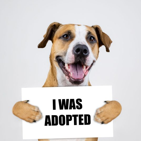Buy 2 bags of dog food and Pedigree will pay your adoption fee