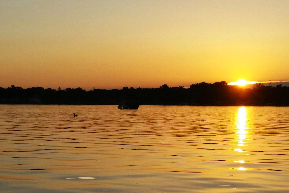 Loon On Our Golden Lake Clark Lake Spirit Foundation