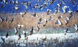 The Mississippi Delta has the greatest waterfowl flyway in the country.