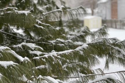 Snow in Clarksville on Feb. 18, 2021. (Keely Quinlan)