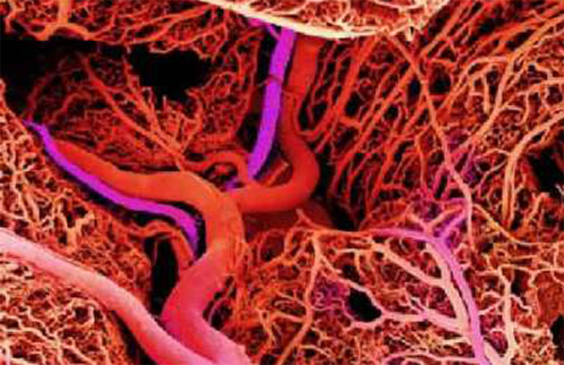 Victor y los vasos sanguíneos