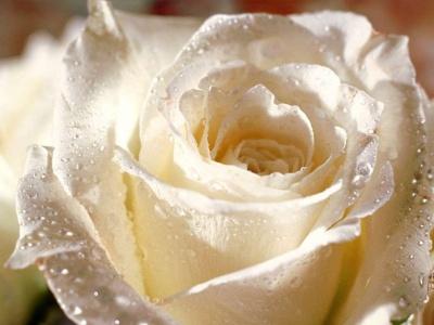 Cuento de la rosa blanca (Autoestima)