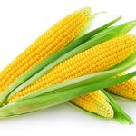 $1.51 Billion Syngenta Corn Seed Class Action Settlement