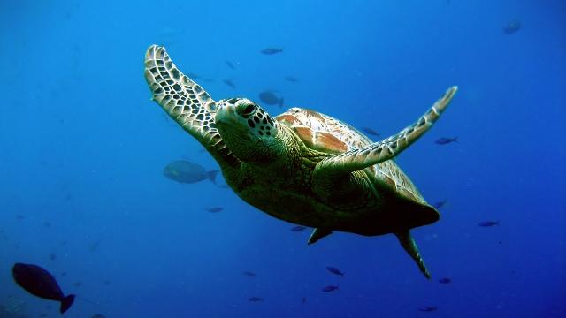 Praia do Forte Sea Turtle Project