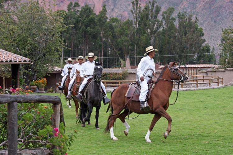 Parading Paso Horses