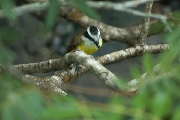 Iguazu Falls birds