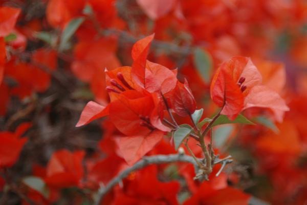 Larco museum flowers in the garden