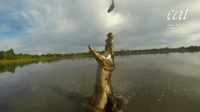 Pantanal piranha fishing