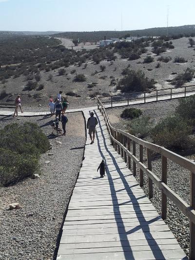 Walking to Punta Tombo reserve