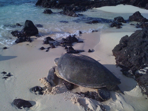 South America's Best Beaches for Wildlife