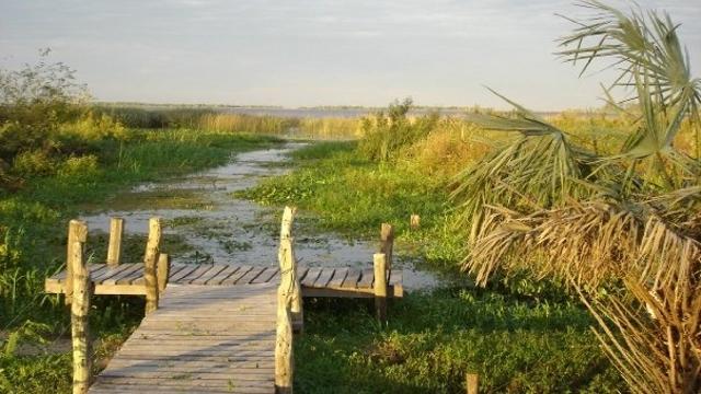 Exploring the Esteros del Ibera Wetlands