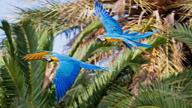 Bright bird-life in Peru's Amazon