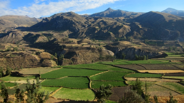 The Colca Canyon
