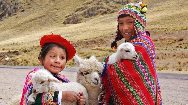 Baby Llamas