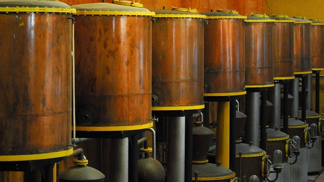 Pisco production in Chile