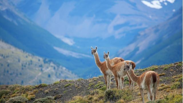 Torres del Paine Wildlife
