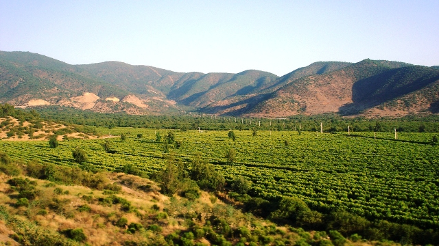 Chile's young winemaking region of Casablanca Valley