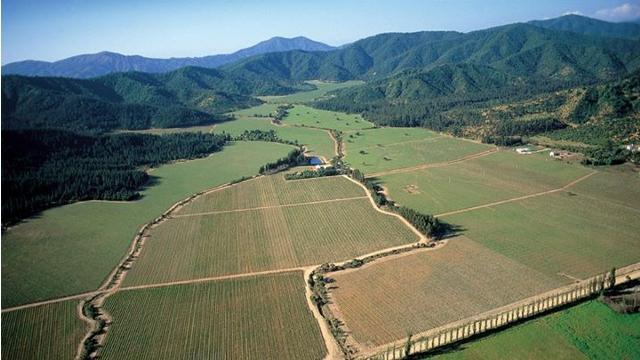 Concha y Toro Vines in the Alto Maipo Valley, Chile