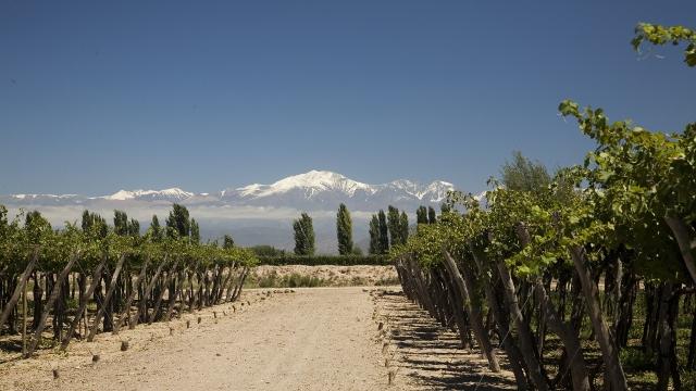 Familia Zuccardi Winery Mendoza