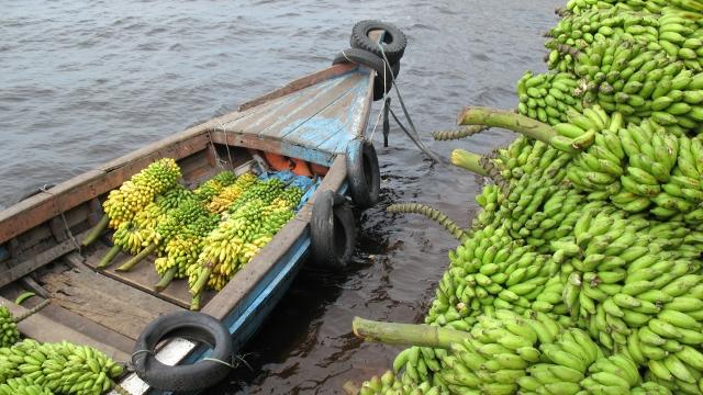 Brazilian Amazon food