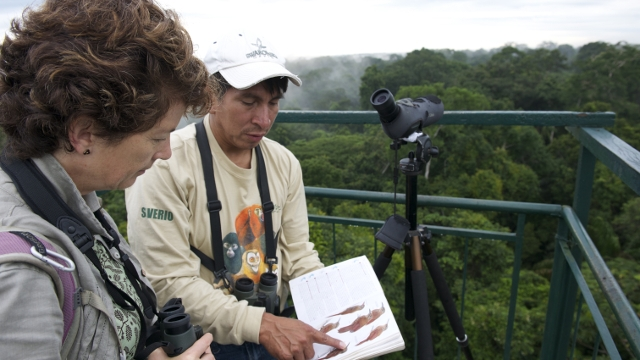 Bird Watching in Peru's Amazon