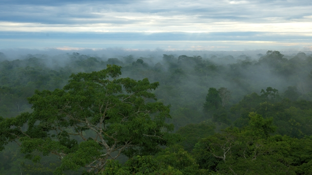 Steamy climate of Peru's Amazon Rainforest