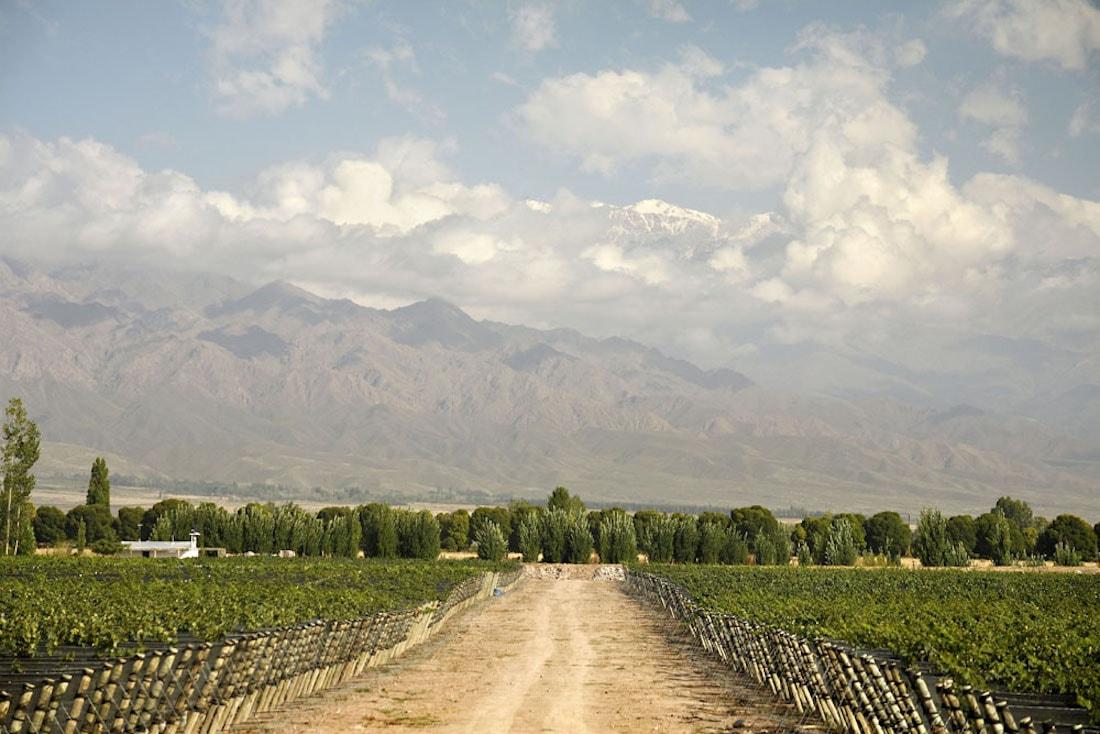 Stunning surroundings of the Zuccardi Winery in Altamira, Mendoza
