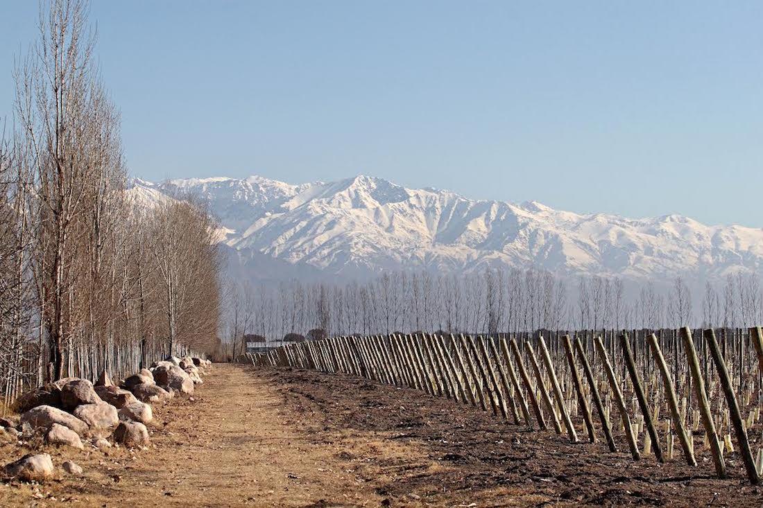Zuccardi Piedra Infinita vineyard, Mendoza