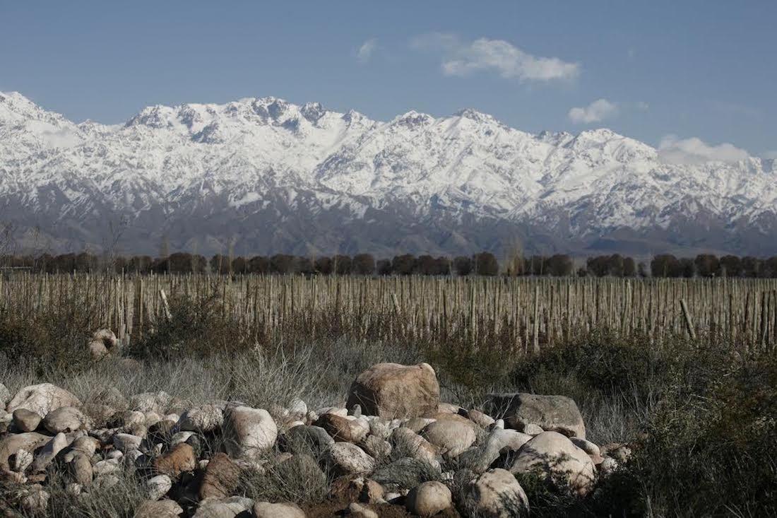 Zuccardi Winery in the Altamira micro region, Mendoza