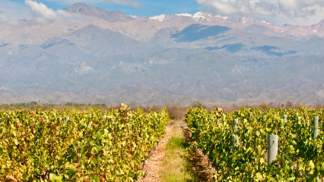 Wines of Mendoza