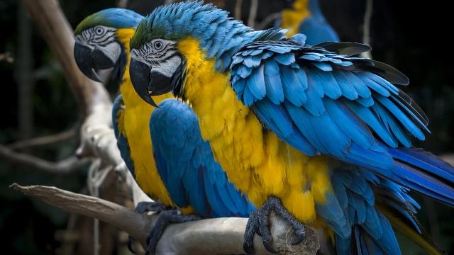 Iguazu Bird Park