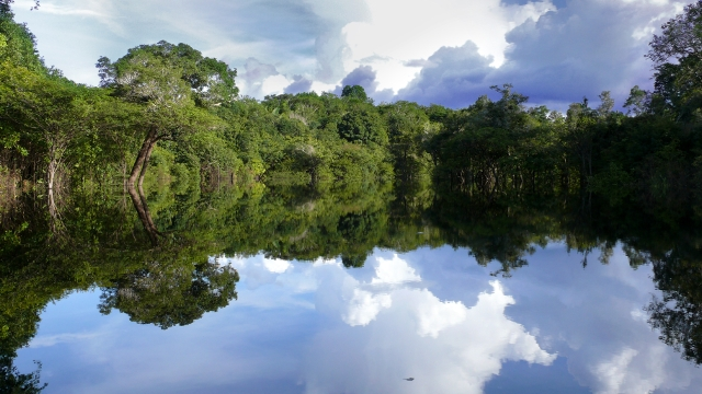 Brazilian Amazon wet season