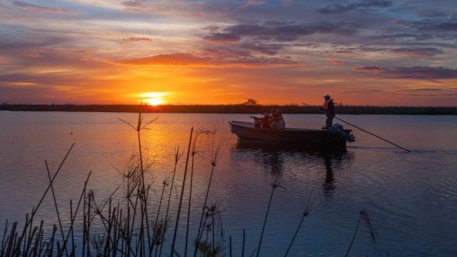 Esteros del Ibera, Argentina