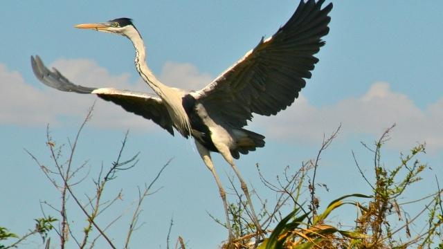 Bird watching in Esteros del Ibera