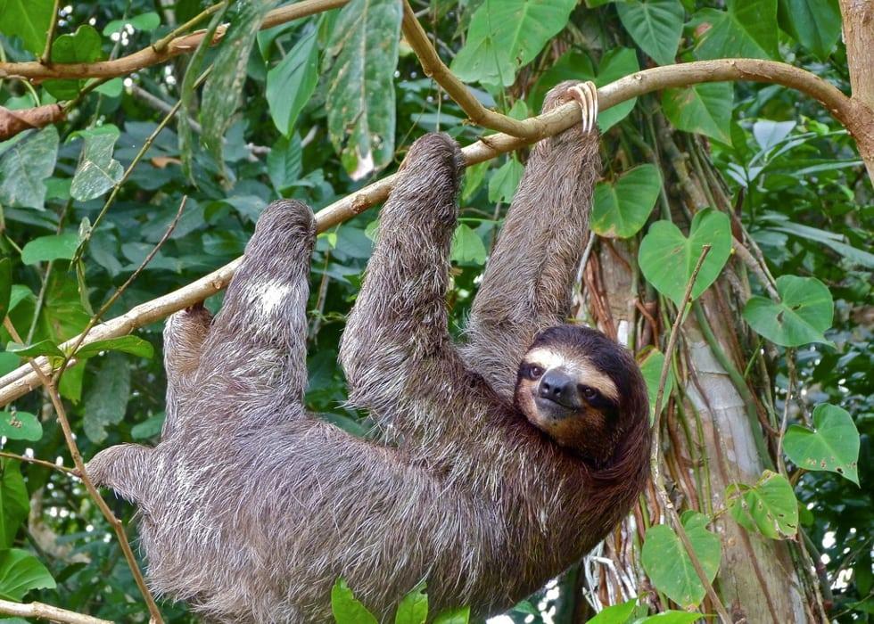 Best Latin America Wildlife Destinations for 2015
