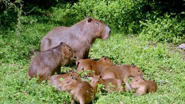 Esteros del Ibera wildlife