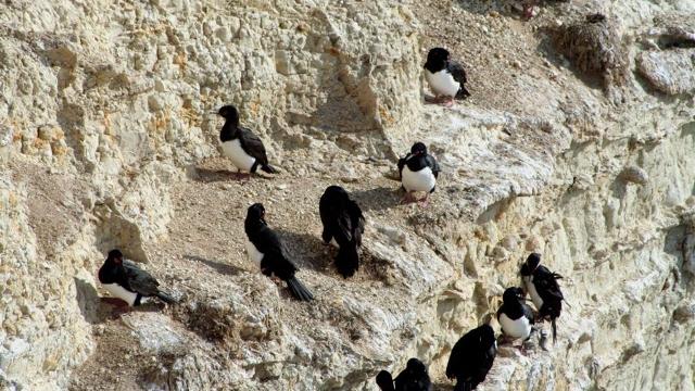 Birdlife Peninsula Valdes
