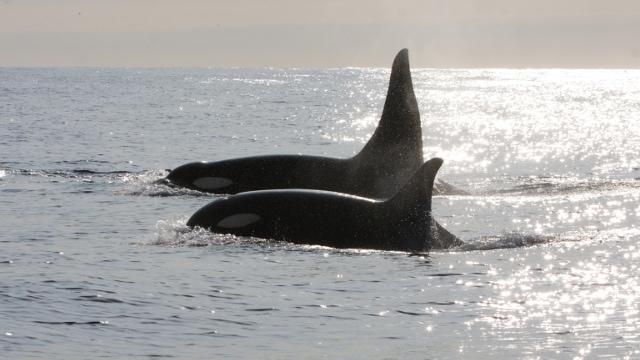 Orcas Peninsula Valdes